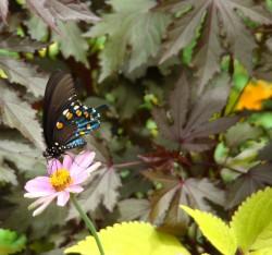 butterfly.jasc