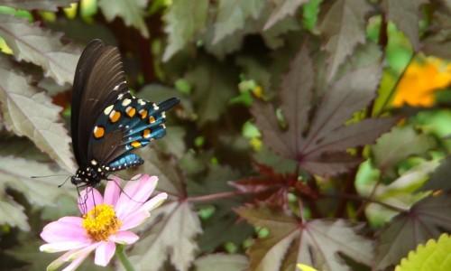 butterfly.jasc_
