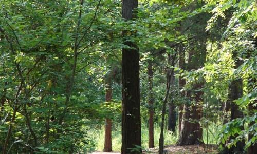 woodlandtrail